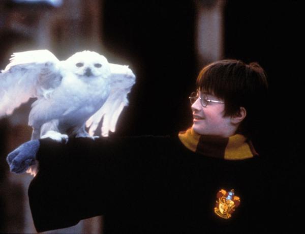 Potter teste dich liebestest harry Teste dich